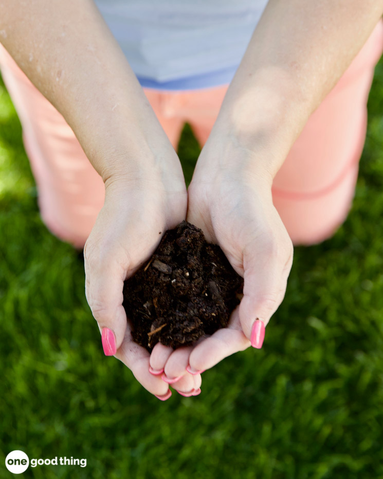 Problems That Can Ruin Your Lawn